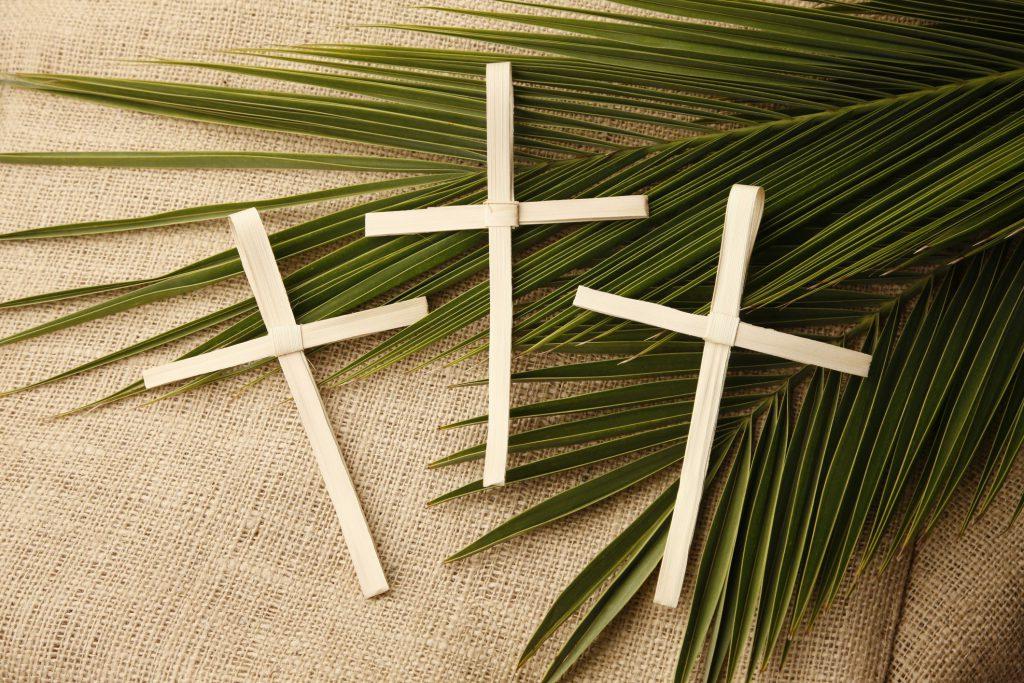 domenica delle palme immagine